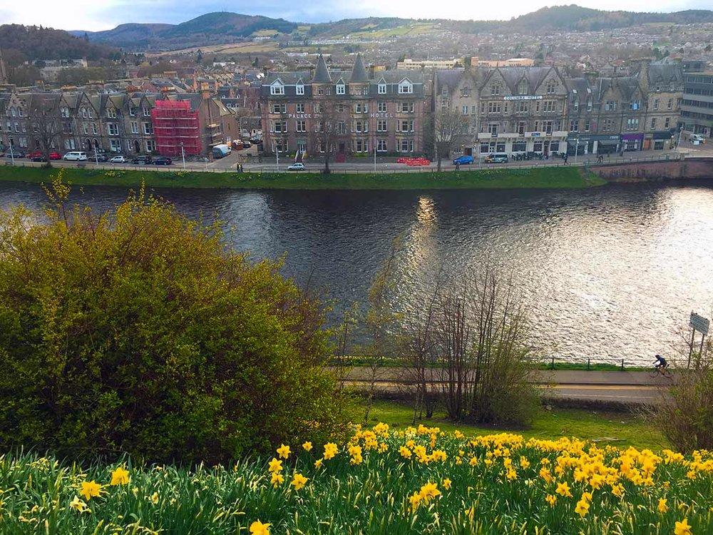 Inverness-daffodils.jpg
