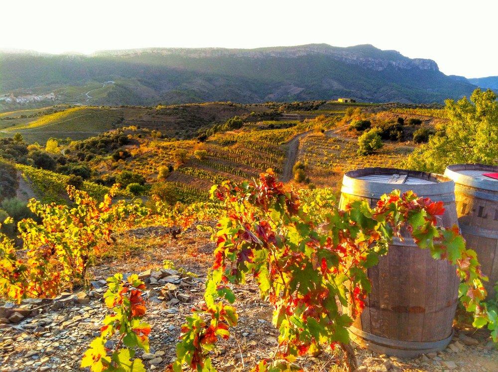 spanish-wine-regions-explanation.jpg