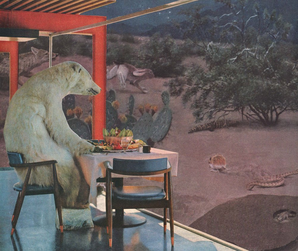 Polar Bear Vacation Night