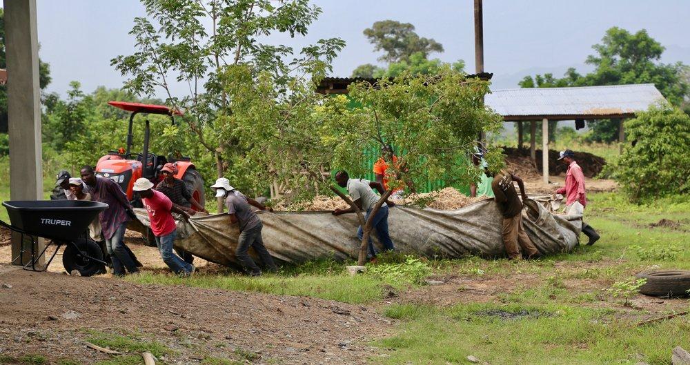 Employees transporting bagasse (sugar cane waste)