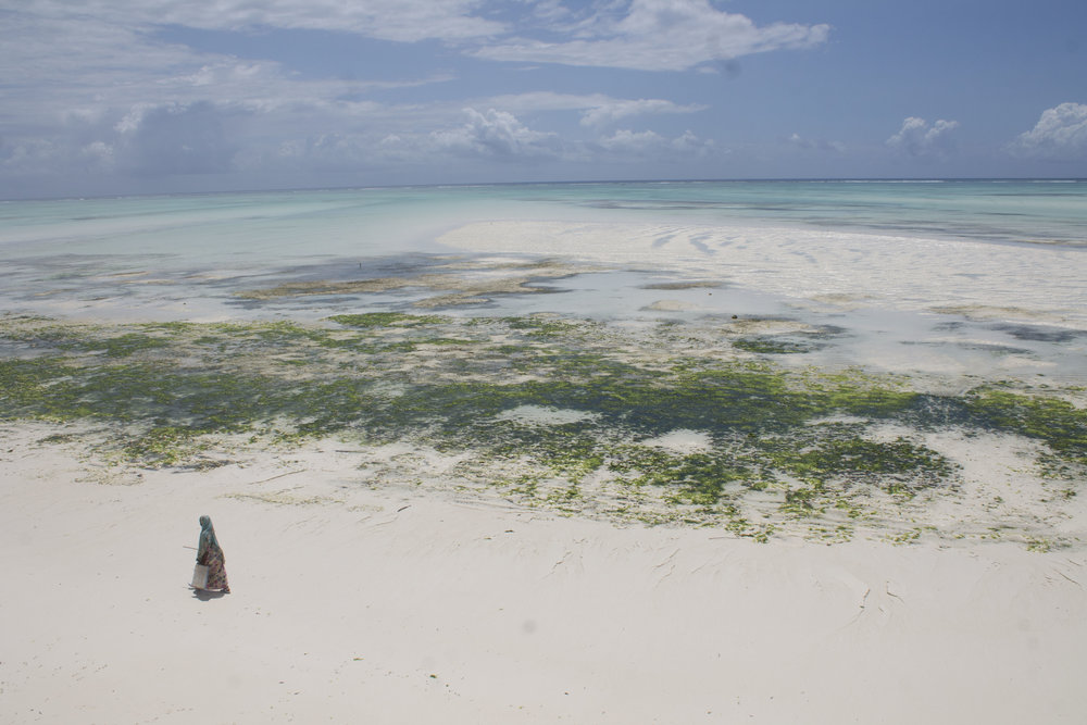 Consciously Connected Travel - Zanzibar Experiences - 78 Hours in Zanzibar- Zanzibar, Tanzania