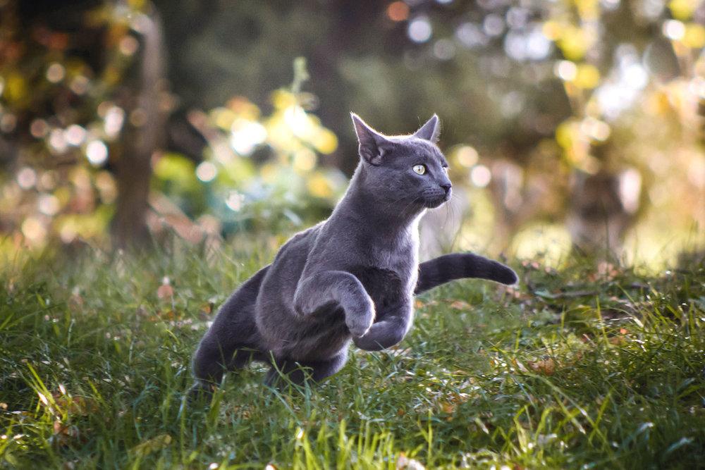 TuMekeFriend_OurStoryCarousel_Cat1.jpg