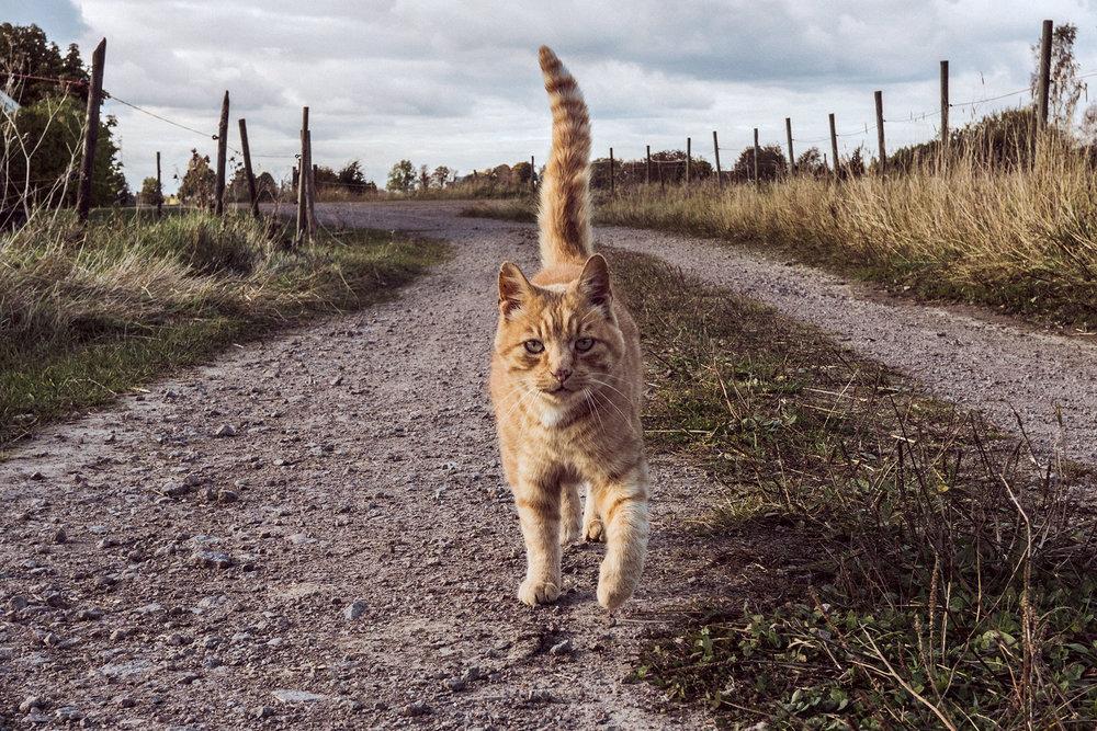 TuMekeFriend_OurStoryCarousel_Cat2.jpg