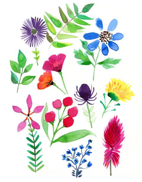 herbarium_s