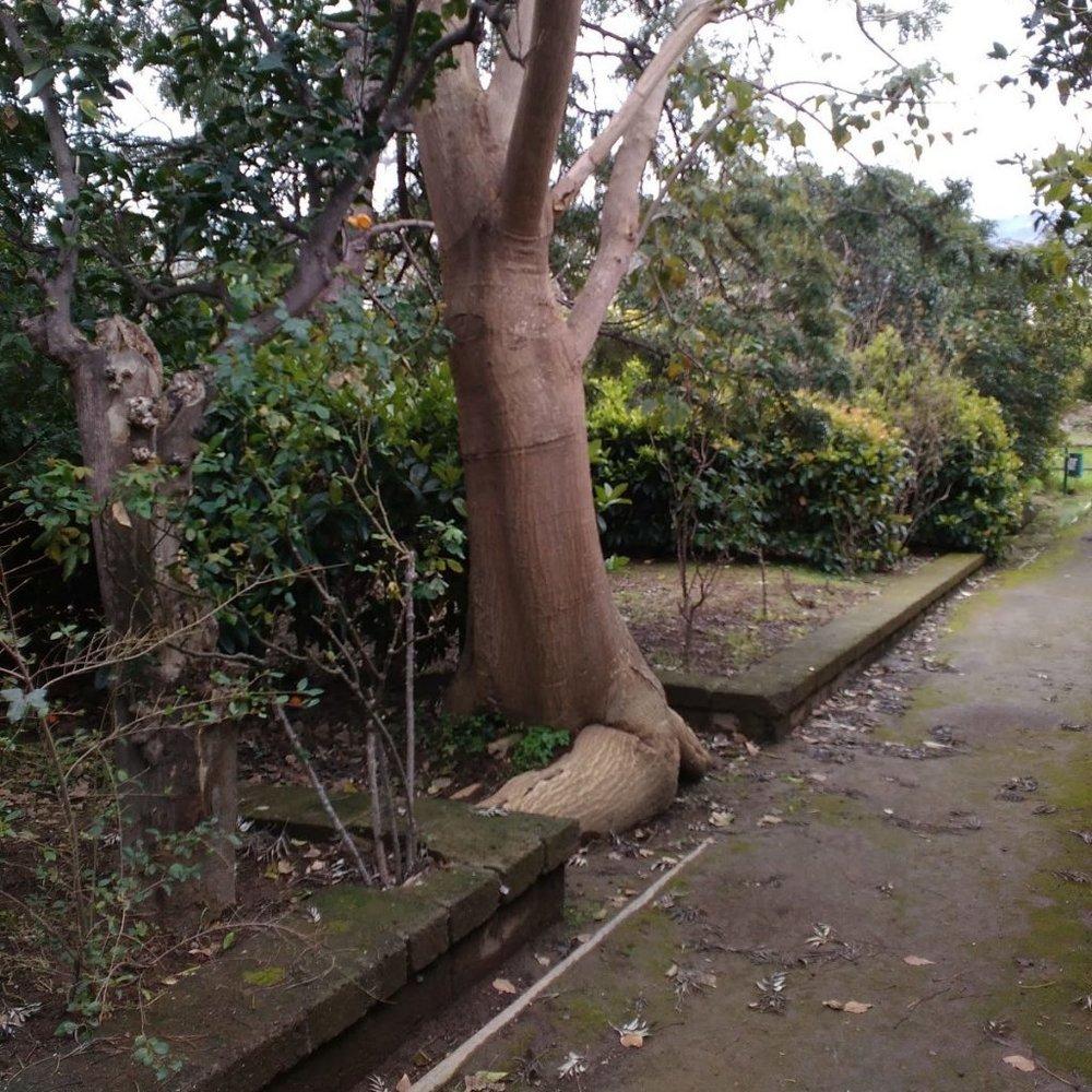 tree1-1024x1024.jpg
