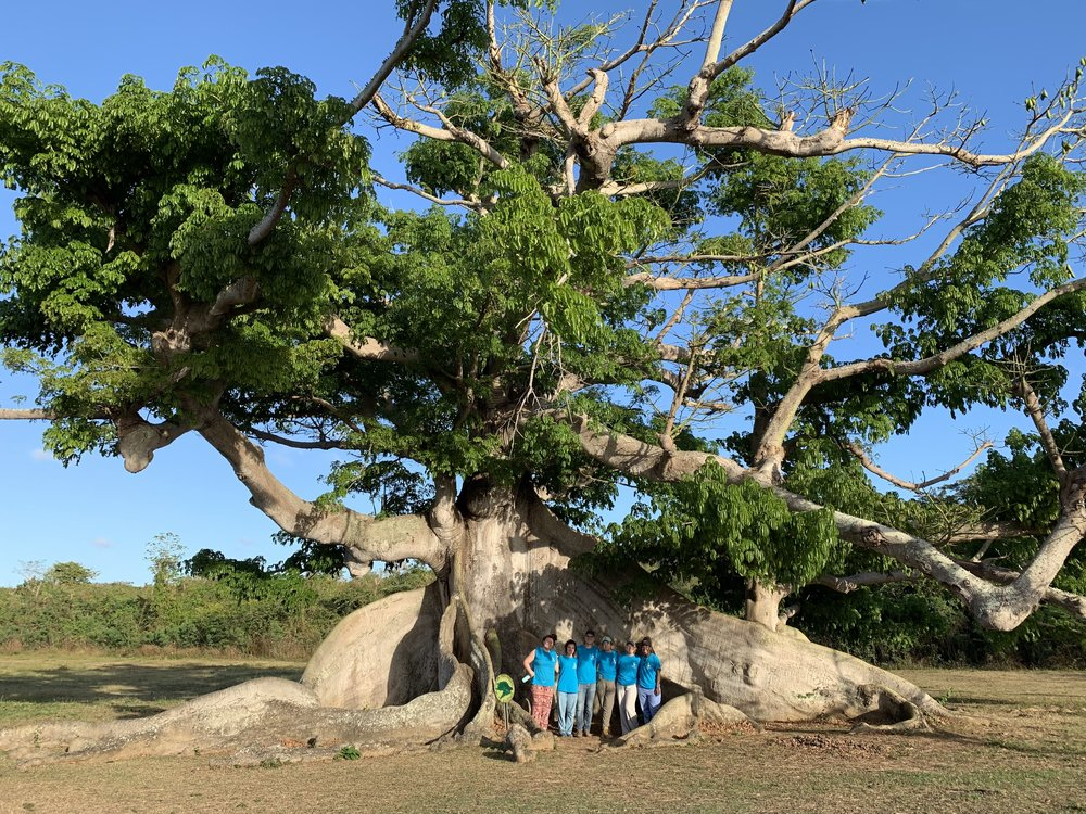 Students visited the Ceiba tree, a 300-year-old sacred tree on the island of Vieques.