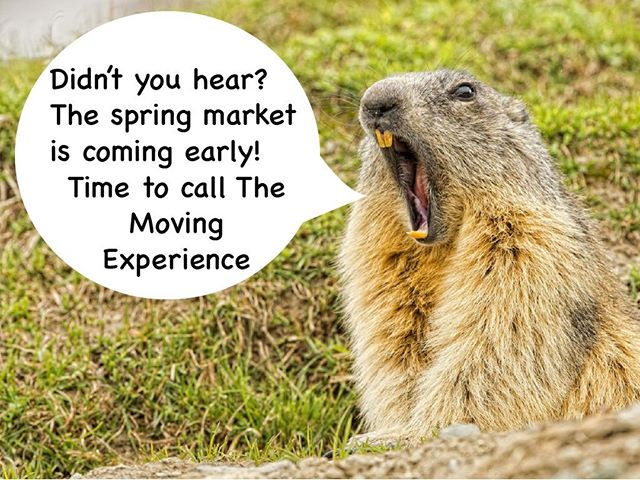 If the groundhog calls for an early spring market...then it must be true! . . . The Moving Experience is your premier real estate partner, ready to guide anyone through the home buying or selling journey.  Give us a call today, you'll be glad you did!