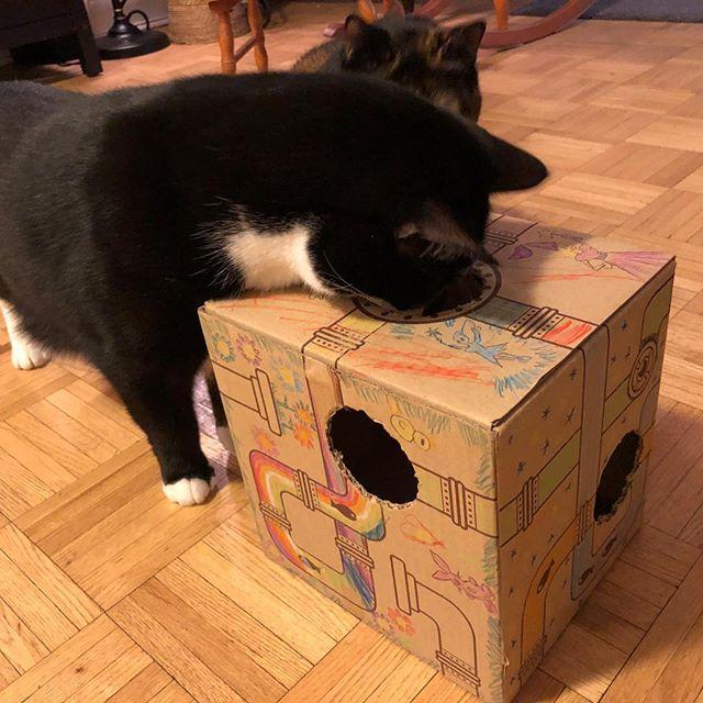 #caturday #lateboxingday