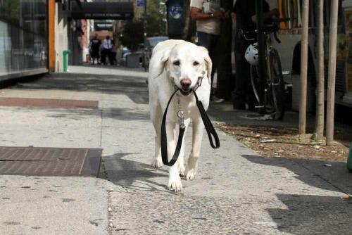 dog supplies.jpg