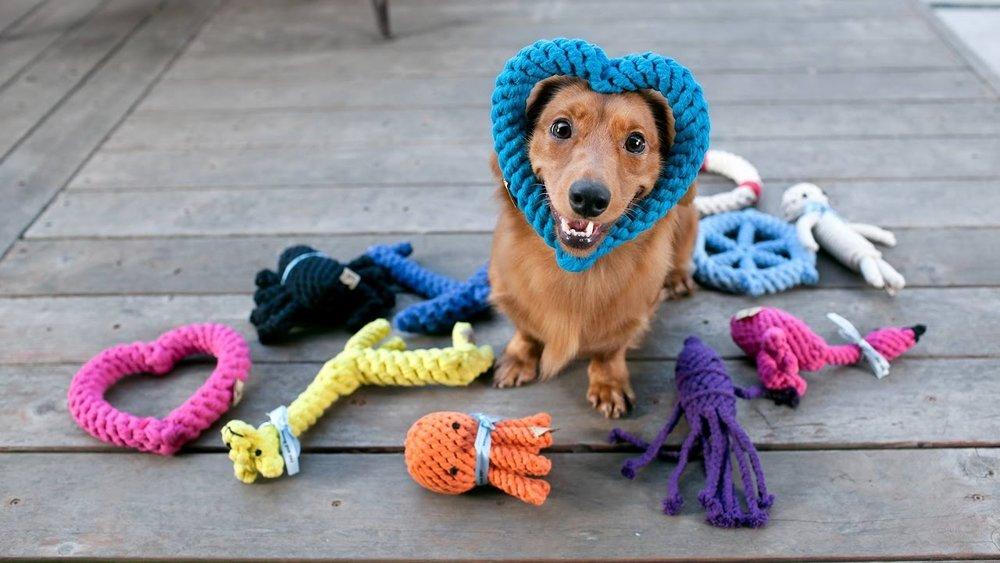 dog toys.jpg