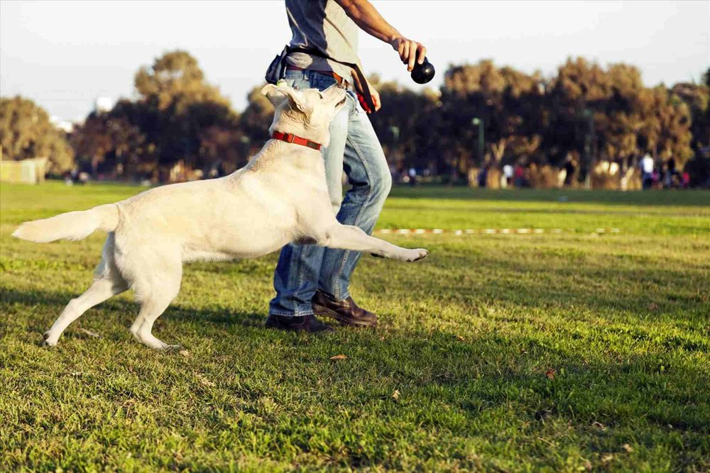 dog playing fetch tips wags to wiskers.jpg