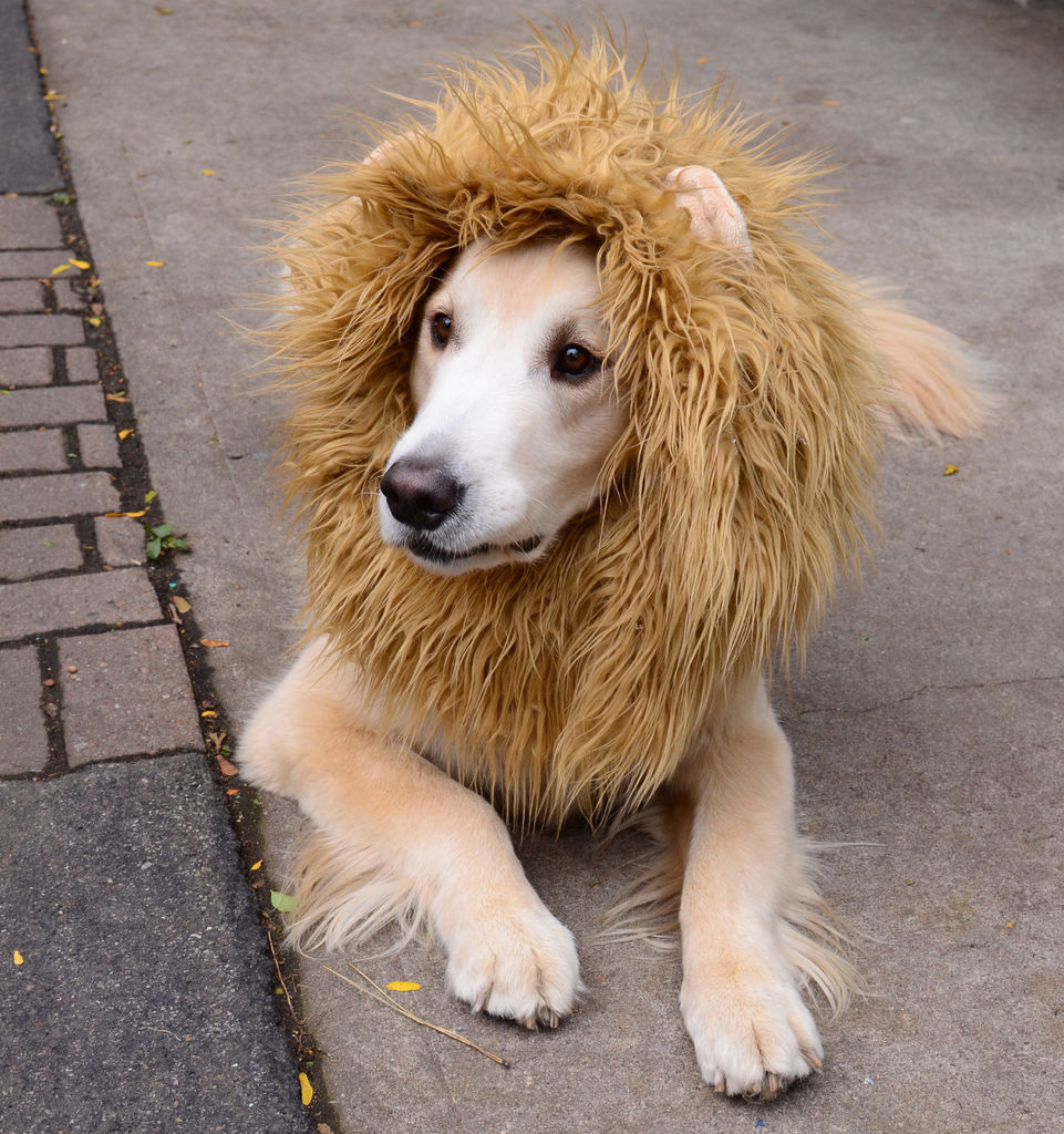 Wags to Wiskers How to Get your Dog into Costume