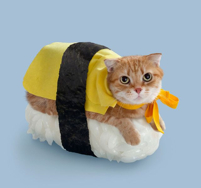 A ridiculously cute and fluffy bite of sushi. Yum!