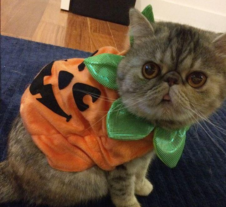 I am pumpkinkitty.