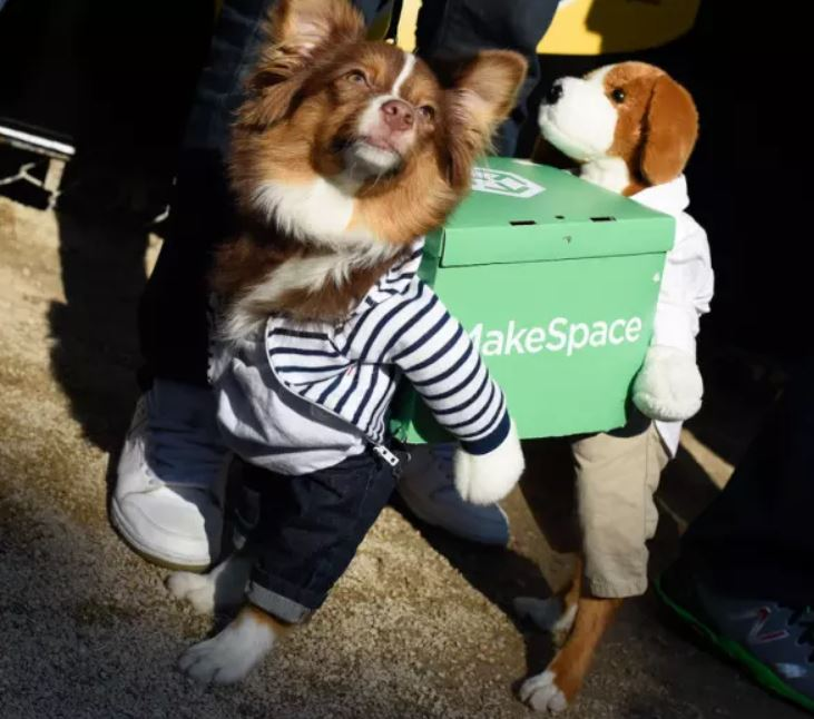 Just a pupper helping a buddy move! On Halloween! How sweet!