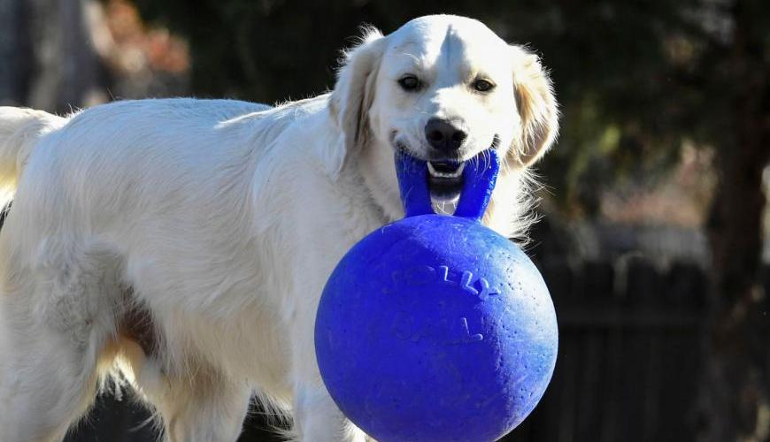 Wags to Wiskers Canine Enrichment