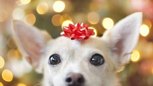 Wags to Wiskers Holiday Photoshoot