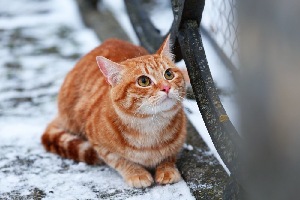 Wags to Wiskers Caring for your Cat in the Winter