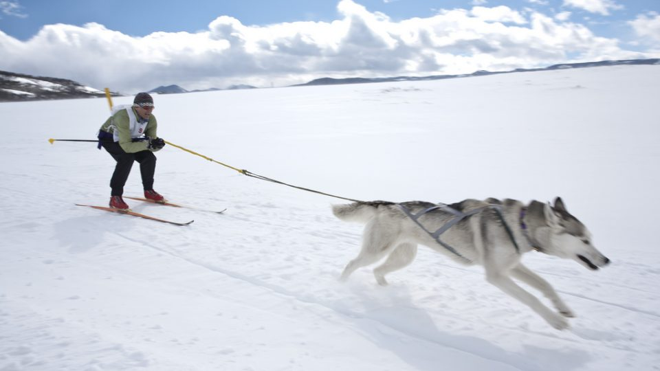 Winter Activities for Dogs