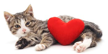 Valentine's Day Ideas for You and your Cat Wags to Wiskers Pet Supplies