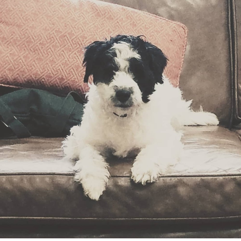 We had a wonderful experience today. All of my questions were answered and the recommendations/plan will greatly improve the quality of life for my dog. My dog felt very comfortable, so much so he fell asleep on the couch. I highly recommend Companion Pet Behavior Solutions. - K. Wheatley