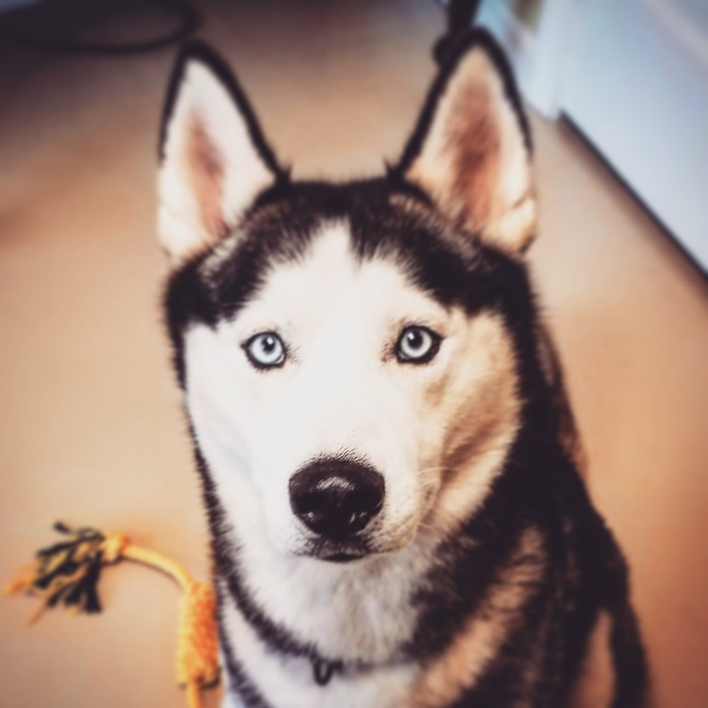 I highly recommend Companion Pet Behavior Solutions. She answered all my questions and did not rush the visit at all. She made myself and my dog feel very comfortable. Thank you! - K. Morman
