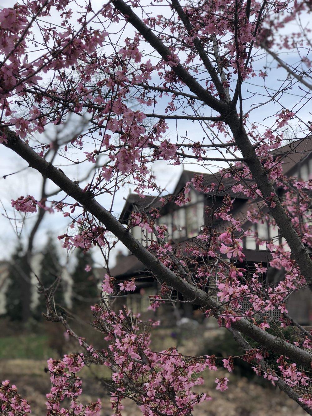East Mount Airy, Philadelphia Free Trees