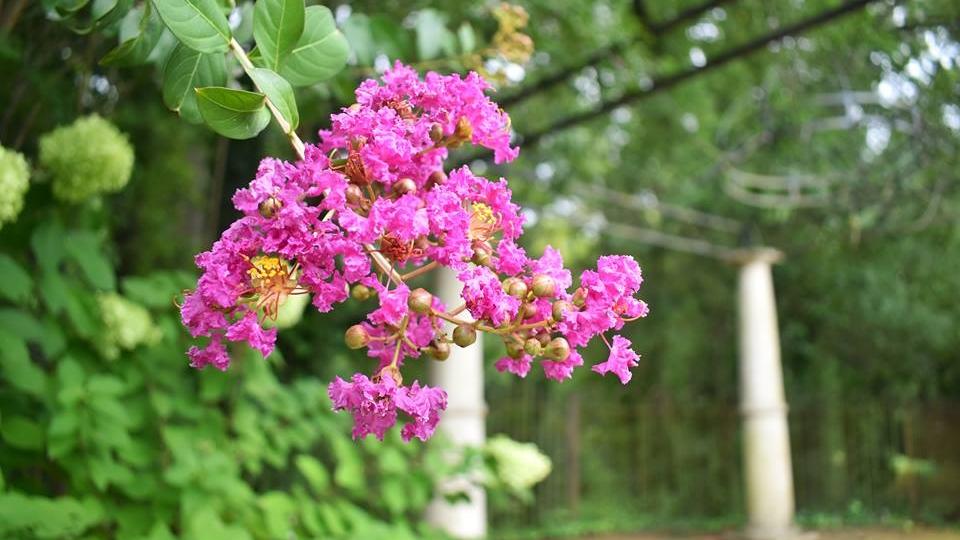 flowers by arbor.jpg