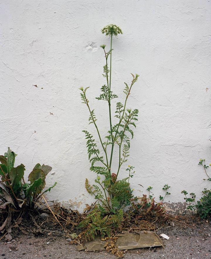 weed_6.jpg