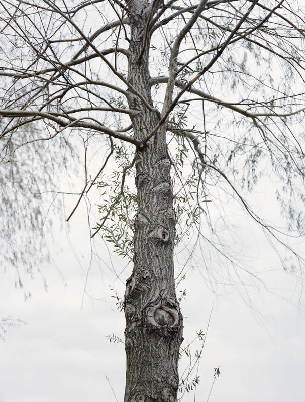 wave_tree_5.jpg