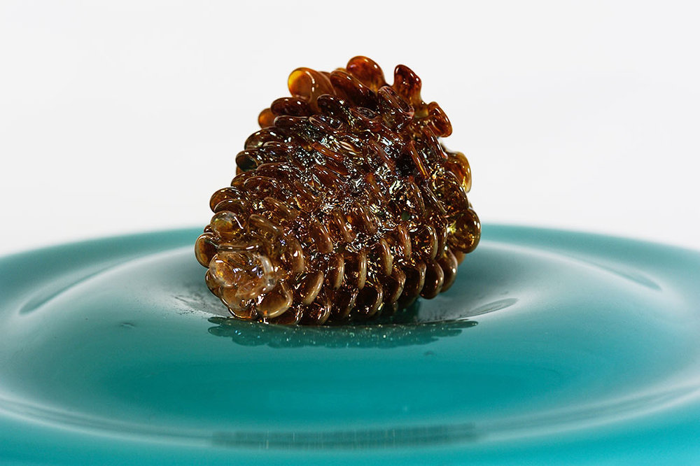 Pinecone In Solution-Focus.jpg