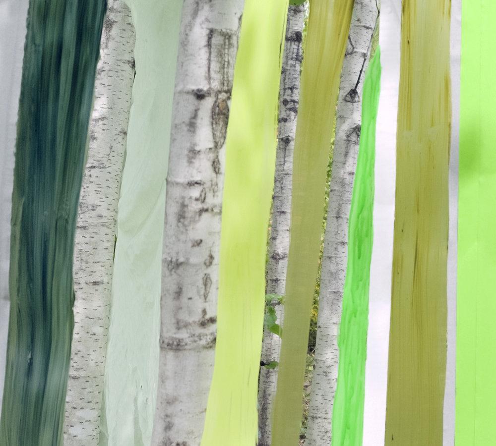 09.07.16 Tofte Lake (Birch)