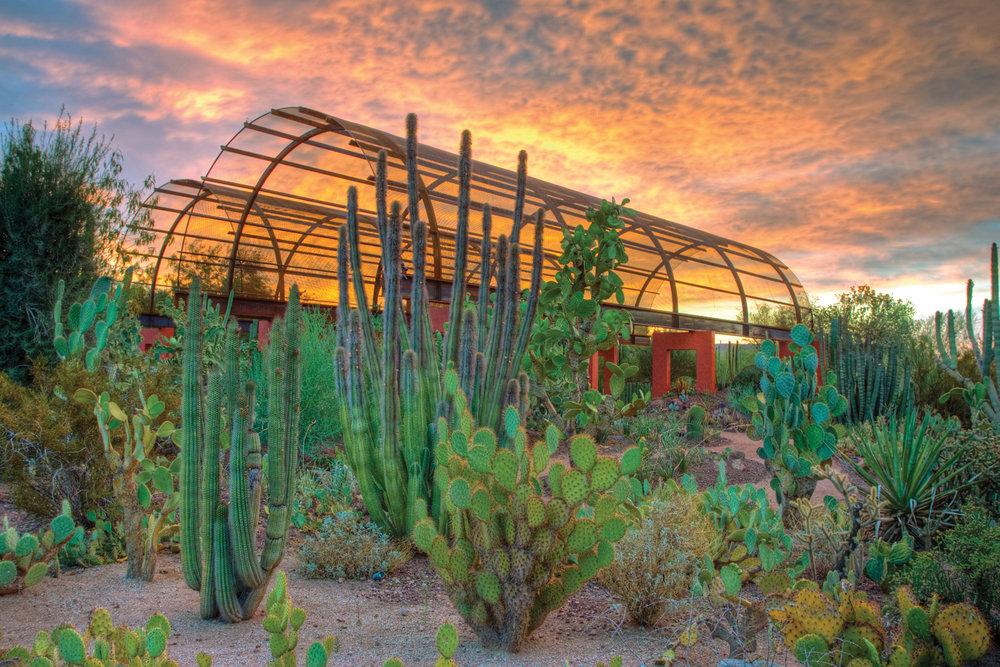 DBG-Cactus-Gallery-1--5f06745b5056b3a_5f067a8a-5056-b3a8-49398221e0979971.jpg