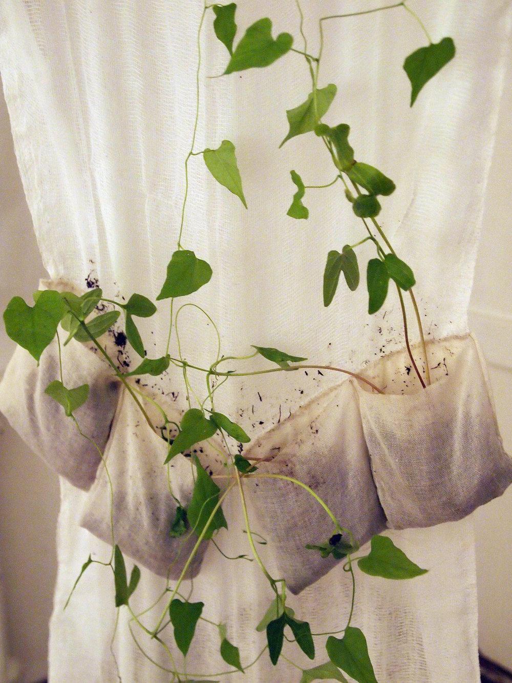 dress vines.jpg