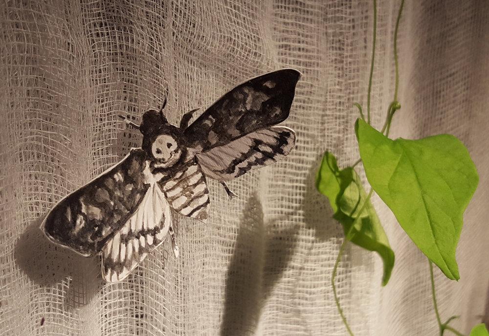 moth detail hi res.jpg