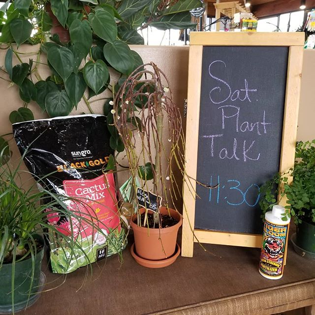 Saturday Plant Talk is free, informative and fun. 11:30 every week. Petree Garden Center & Florist.