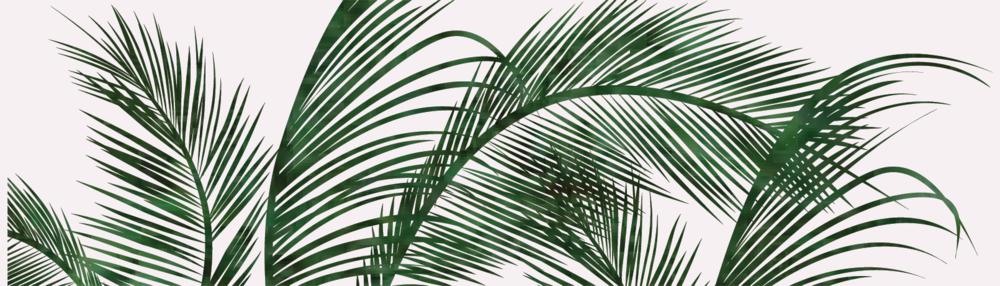 palms-01.png