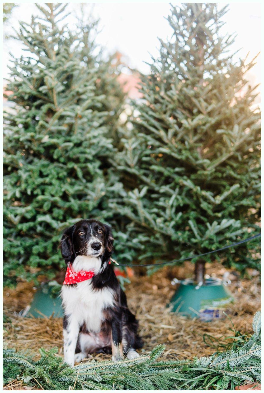 Christmas Tree Minis_3697.jpg