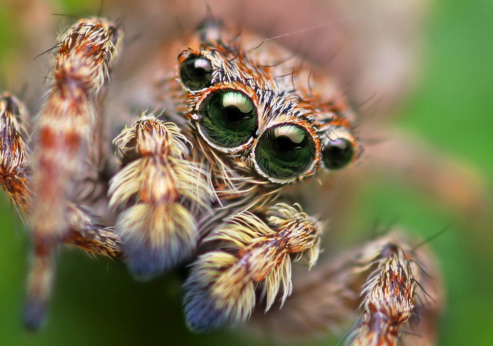 Spiders - Fine-tune your finger independency,dexterity and multi-string picking.