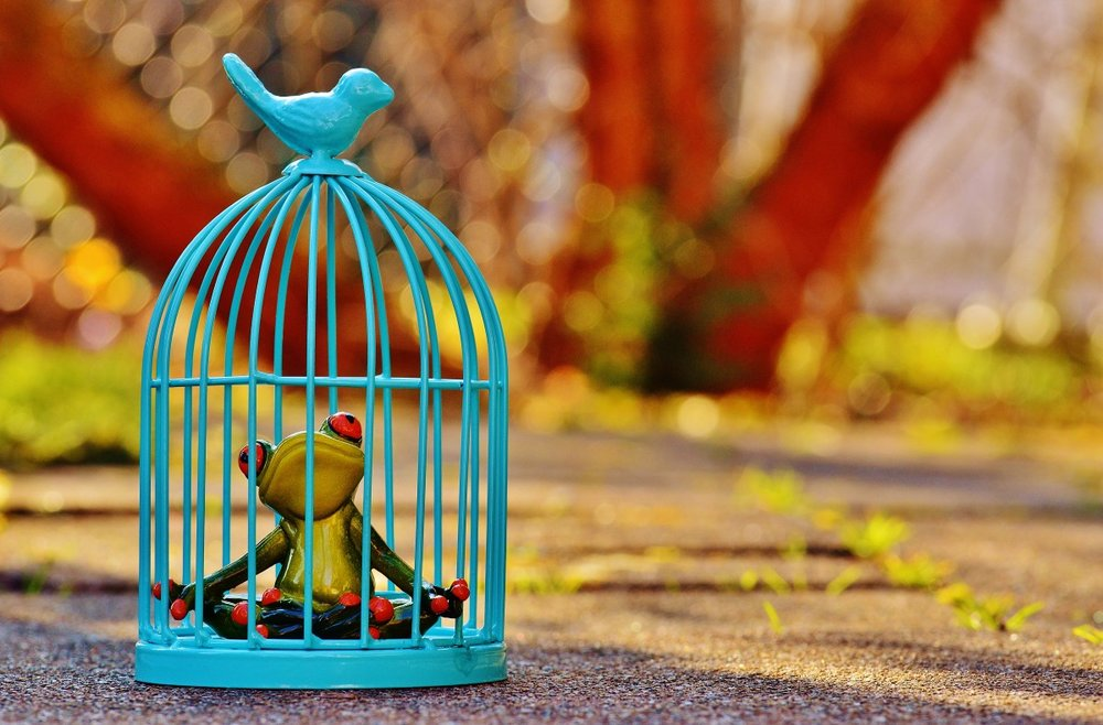 frog_cage_imprisoned_sad_figure_funny_cute_caught-816875.jpg