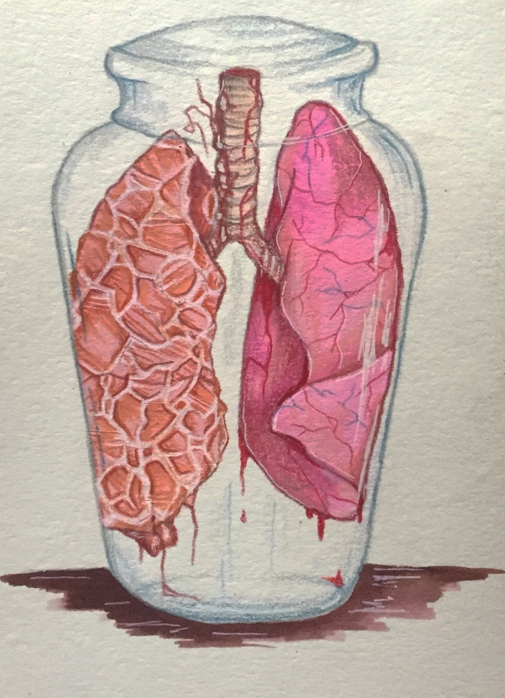 Organ Donor,2019