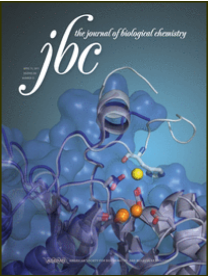 Engineered conformation-dependent VEGF peptide mimics are effective in inhibiting VEGF signaling pathways. Journal of Biological Chemistry.png