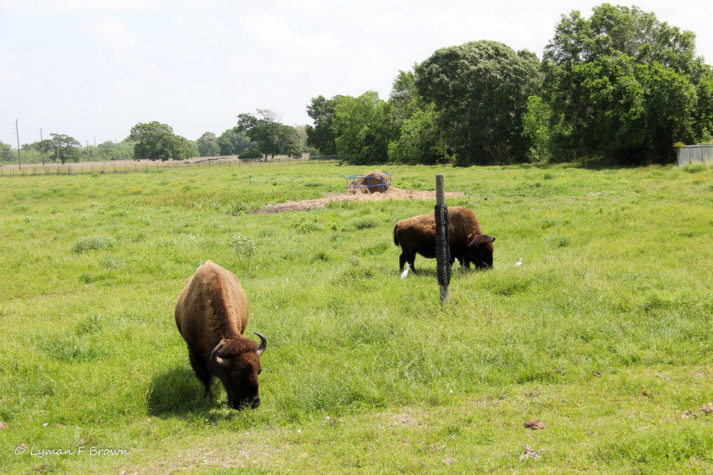 Bison - View From Bison Viewing Platform