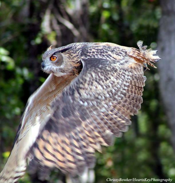 Owl Pellet Lab for Educators — ABNC