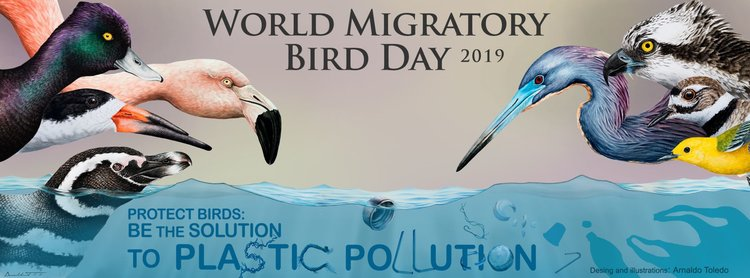 World Migratory Bird Day with ABNC @ Armand Bayou Nature Center | Pasadena | Texas | United States