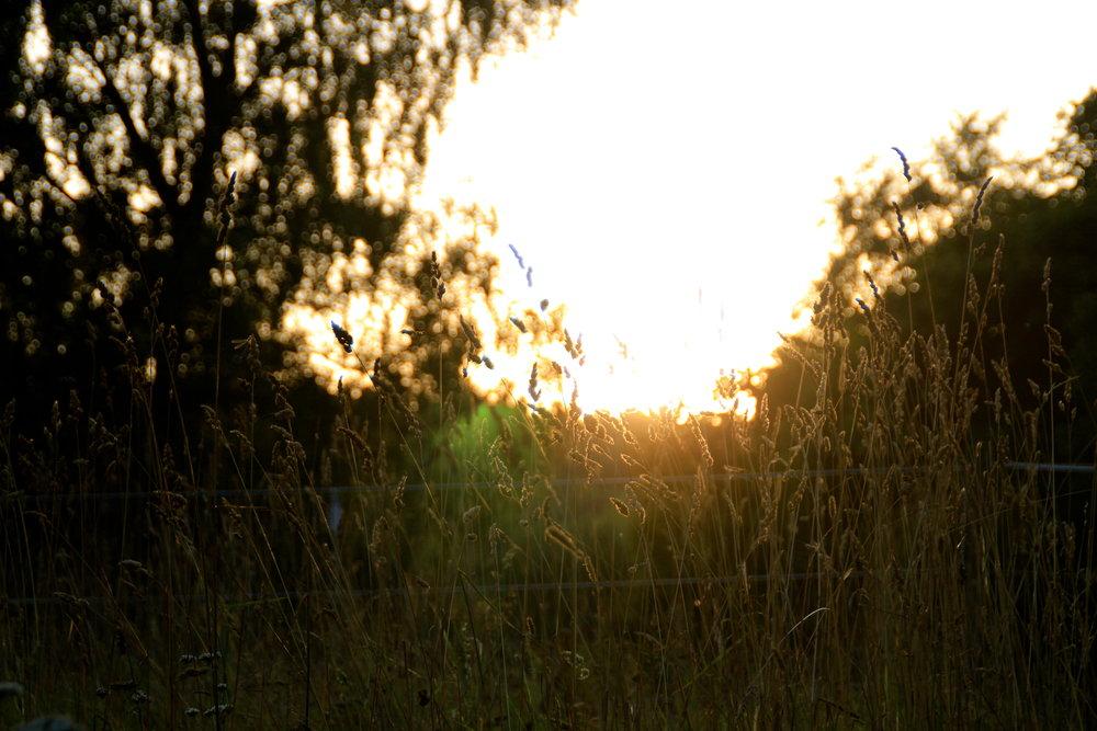 """""""Ser du färgerna i solen?"""" - bild från augustiskymning tvåtusentretton."""