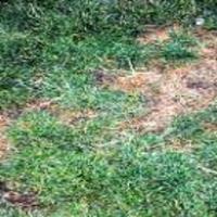 Leaf Spot -