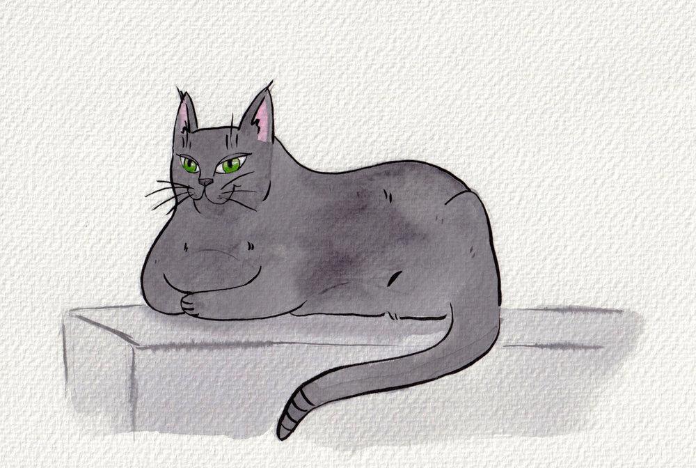 cat_on_sofa_portfolio.jpg