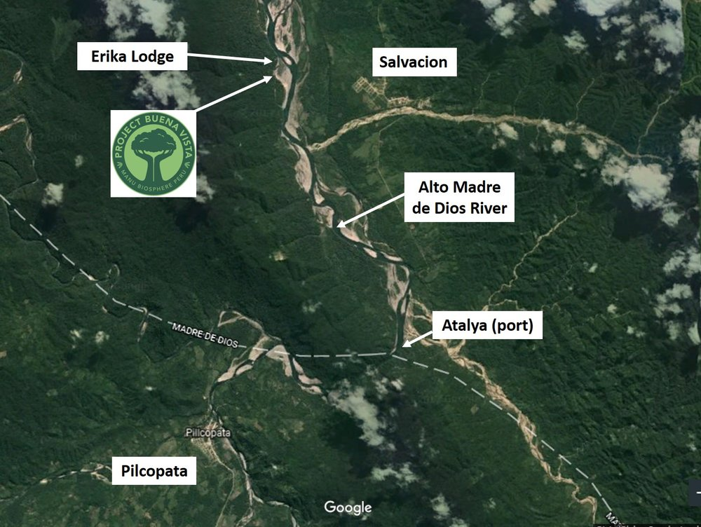 The Project Buena Vista Property is located in Southwestern Peru on the Alto Madre de Dios river in the Manu Biosphere Preserve. PBV is directly across the river from the village of Salvacion and right next door to the ecotourism lodge, Erika Lodge.