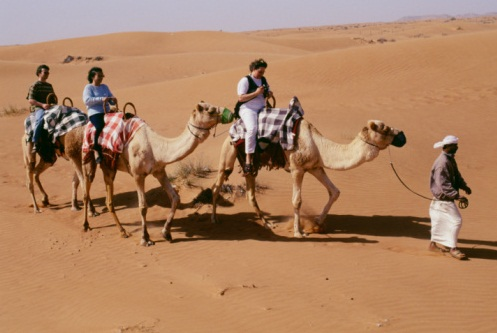 camel- evening desert safari - beyond dubai.jpg